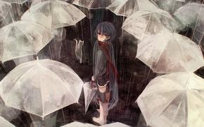 Picture cat, cat, people, rain, the crowd, umbrella, art, umbrellas, vocaloid, hatsune miku