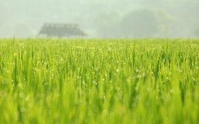 Picture greens, field, nature, Rosa, spring, may, August Huang Photography