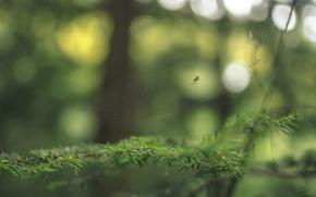 Wallpaper branches, web, spider