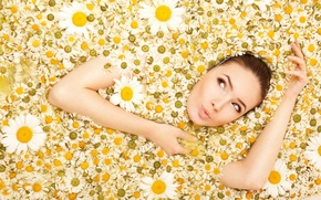 Picture look, girl, flowers, chamomile, camomiles