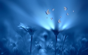 Picture light, butterfly, flowers, style, background, blue, Josep Sumalla