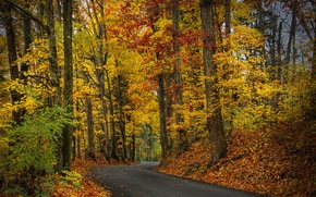 Picture autumn, forest, leaves, trees, nature, Park, HDR, hdr, walk, forest, road, trees, nature, park, autumn, …