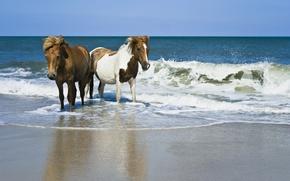 Picture sand, sea, Horse