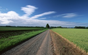 Wallpaper field, clouds, trees, Road
