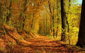Wallpaper trees, autumn, forest, leaves