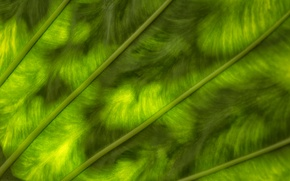 Picture greens, sheet, color, texture