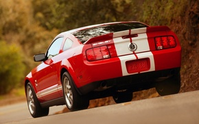 Picture Shelby, GT500, Cobra