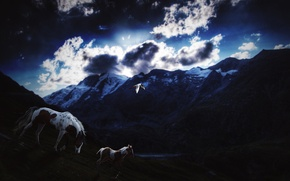 Picture the sky, stars, clouds, snow, mountains, bird, Horse, the evening, twilight, foal