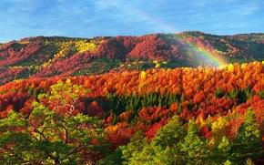 Picture forest, Carpathians, gold, Ukraine, autumn, Transcarpathia, trees, mountains, colorful, the sun