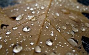 Wallpaper macro, sheet, rain, cool, water, autumn, drops