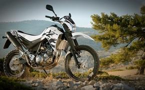 Picture Yamaha, cross, XT660R