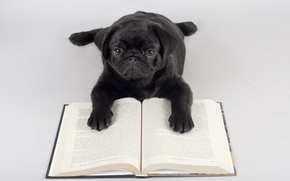 Picture background, dog, book