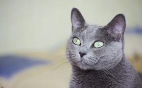 Picture cat, look, macro