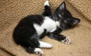 Wallpaper cat, pose, kitty, black, lies, funny, a soft place
