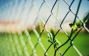 Picture leaves, macro, background, mesh, widescreen, Wallpaper, the fence, blur, fence, the fence, leaf, wallpaper, leaves, …