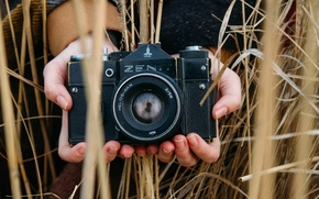 Picture field, retro, hands, spikelets, the camera