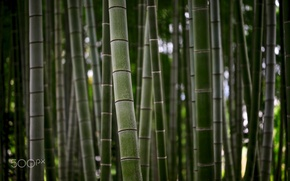 Picture nature, stems, trunks, texture, bamboo