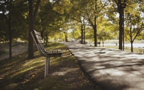 Picture Nature, Trees, The sidewalk, Park Bench