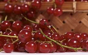 Picture macro, food, currants