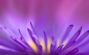 Wallpaper fragile, fragile, flower, purple