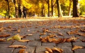Picture autumn, leaves, trees, nature, Park, colors, walk, road, trees, nature, park, autumn, leaves, walk, fall