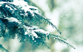 Wallpaper spruce, greens, snow, bokeh, winter
