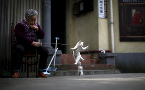 Picture kitty, street, the situation, China, Grandma, white cat