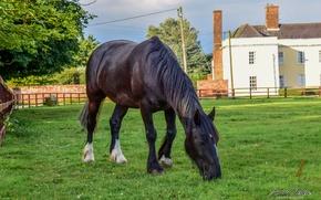 Picture Nature, Sunset, Magic, Summer, United Kingdom, Dream, Animal, Horse, Sorin Ochea Photography