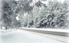 Picture winter, frost, forest, nature, landscapes, Road