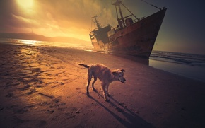 Picture sea, sunset, ship, dog