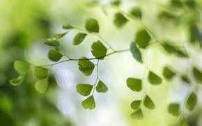 Picture macro, glare, background, foliage, branch