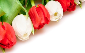 Wallpaper BACKGROUND, WHITE, RED, TULIPS