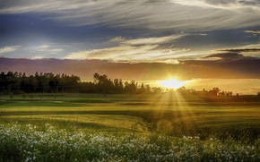 Picture field, the sky, grass, trees, sunset, flowers, chamomile, the rays of the sun