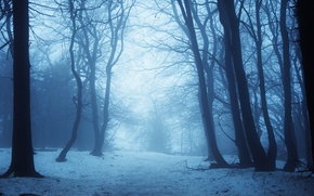 Picture winter, snow, trees, twilight