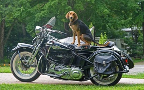 Picture Dog, Harley, Moto, Mood.