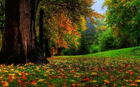 Picture autumn, forest, grass, falling leaves