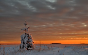 Picture ice, winter, snow, sunset, clouds, lake, tree, the evening