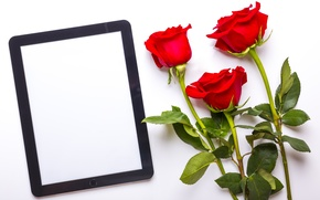 Picture roses, bouquet, red, tablet, flowers, roses