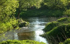 Picture greens, summer, grass, trees, river, Germany, Bayern, Regenstauf