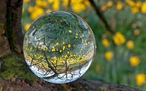Picture BACKGROUND, FOREST, WATER, SPHERE, BALL, FLOWERS, REFLECTION, MOSS, YELLOW, LENS, TRANSPARENT, DROP