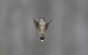 Picture background, wings, bird, stroke