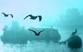 Picture birds, fog, ship, harbour