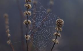 Picture drops, macro, nature, rain, web, spring