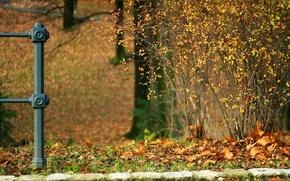 Picture autumn, leaves, Bush, Stones