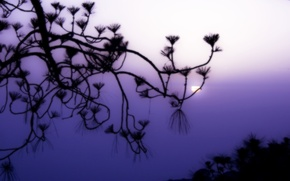 Wallpaper fog, the sun, Branch, lilac