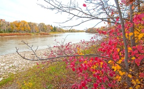 Wallpaper paint, Park, trees, leaves, the crimson, autumn, pond, river, forest