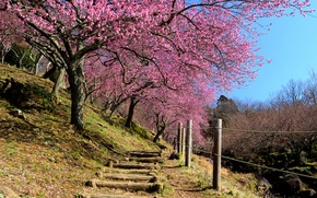 Picture the sky, the fence, spring, Japan, garden, Sakura, slope, stage