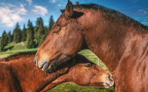 Picture love, horses, horse, pair