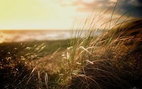 Picture Grass, Beach, nature