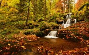 Picture autumn, forest, leaves, trees, France, waterfall, cascade, France, Cascade de la Serva, Vosges Mountains, Neuviller-la-Roche, …